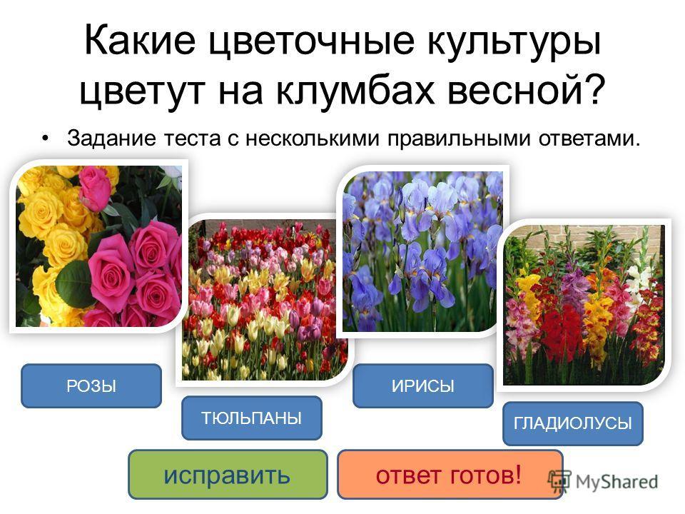 Какие цветочные культуры цветут на клумбах весной? Задание теста с несколькими правильными ответами. ИРИСЫ ТЮЛЬПАНЫ ГЛАДИОЛУСЫ РОЗЫ исправитьответ готов!