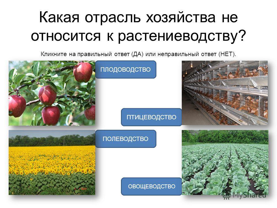 Какая отрасль хозяйства не относится к растениеводству? Кликните на правильный ответ (ДА) или неправильный ответ (НЕТ). ПТИЦЕВОДСТВО ПОЛЕВОДСТВО ОВОЩЕВОДСТВО ПЛОДОВОДСТВО