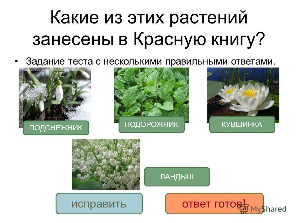 Какие из этих растений занесены в Красную книгу? Задание теста с несколькими правильными ответами. ЛАНДЫШ исправитьответ готов! ПОДСНЕЖНИК ПОДОРОЖНИККУВШИНКА