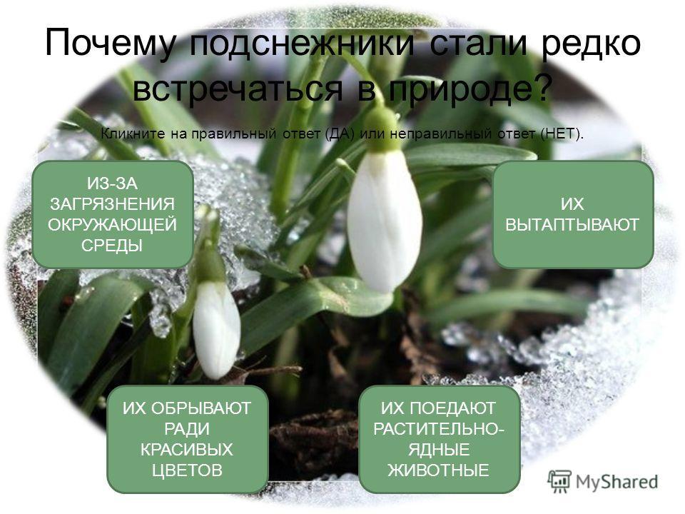 Охрана растений урок окружающего