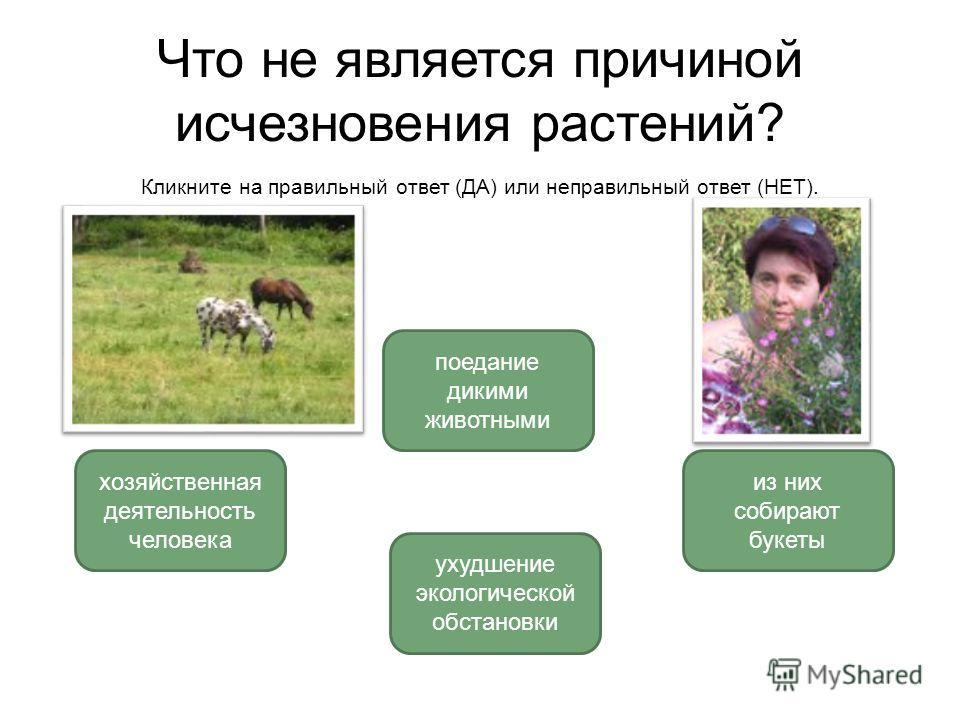 Что не является причиной исчезновения растений? Кликните на правильный ответ (ДА) или неправильный ответ (НЕТ). поедание дикими животными хозяйственная деятельность человека из них собирают букеты ухудшение экологической обстановки