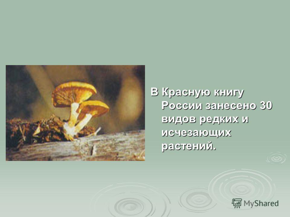 В Красную книгу России занесено 30 видов редких и исчезающих растений.