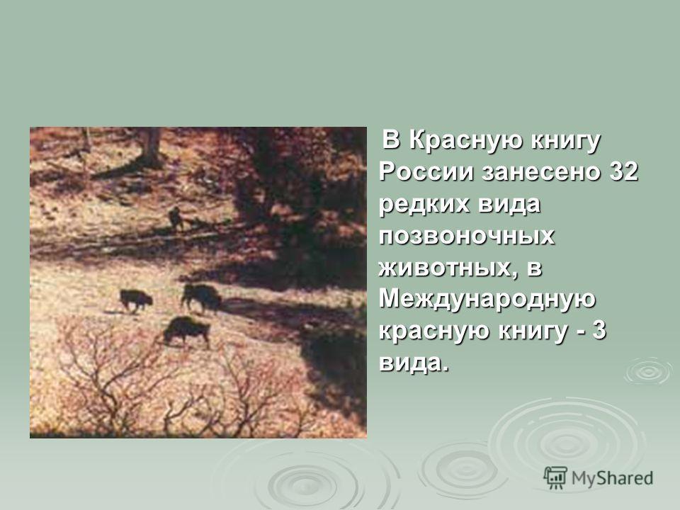 В Красную книгу России занесено 32 редких вида позвоночных животных, в Международную красную книгу - 3 вида. В Красную книгу России занесено 32 редких вида позвоночных животных, в Международную красную книгу - 3 вида.