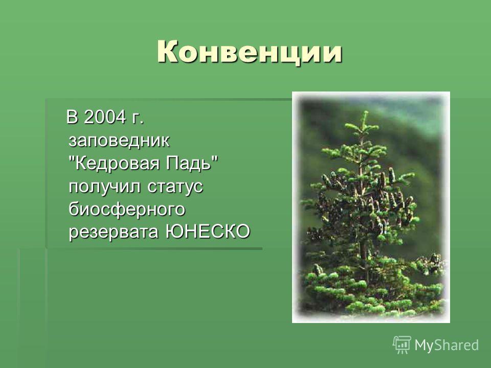 Конвенции В 2004 г. заповедник Кедровая Падь получил статус биосферного резервата ЮНЕСКО В 2004 г. заповедник Кедровая Падь получил статус биосферного резервата ЮНЕСКО