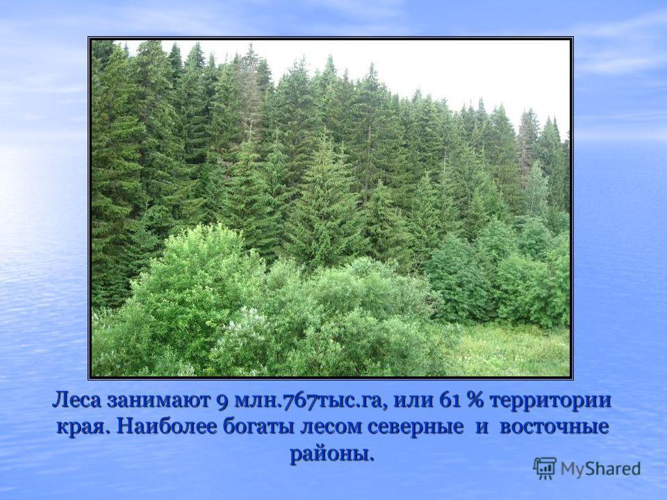Леса занимают 9 млн.767тыс.га, или 61 % территории края. Наиболее богаты лесом северные и восточные районы.
