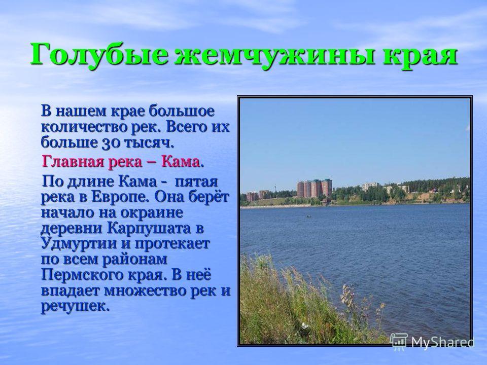 Голубые жемчужины края В нашем крае большое количество рек. Всего их больше 30 тысяч. В нашем крае большое количество рек. Всего их больше 30 тысяч. Главная река – Кама. Главная река – Кама. По длине Кама - пятая река в Европе. Она берёт начало на ок