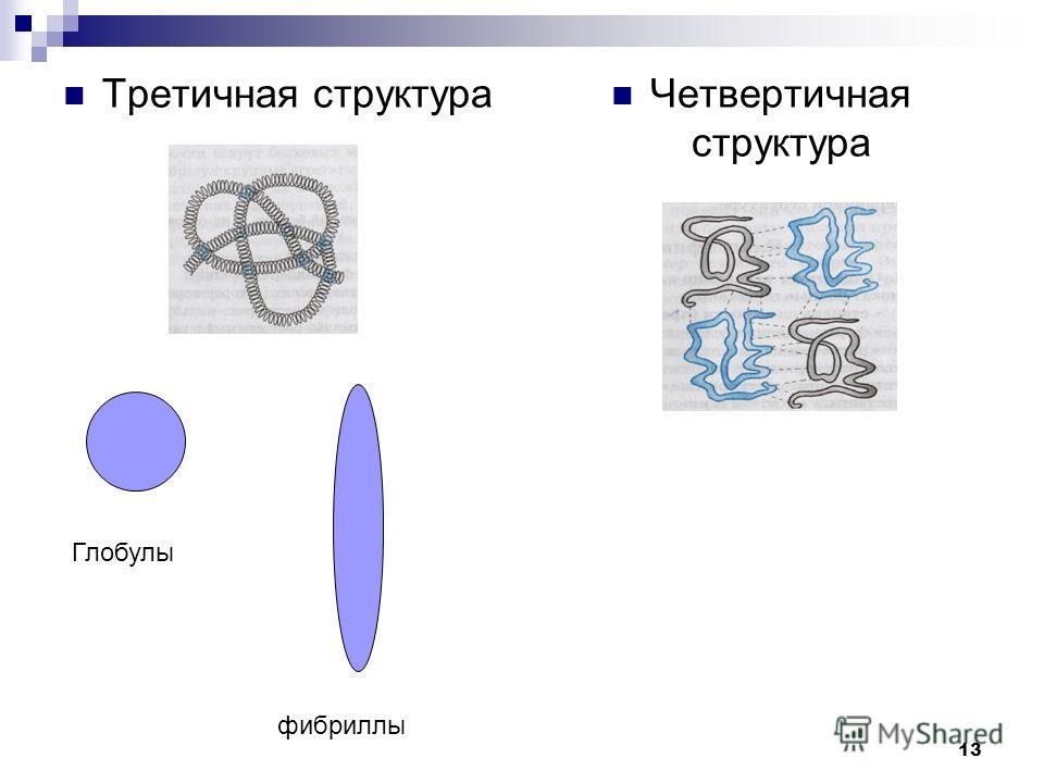 Третичная структура Четвертичная структура Глобулы фибриллы 13