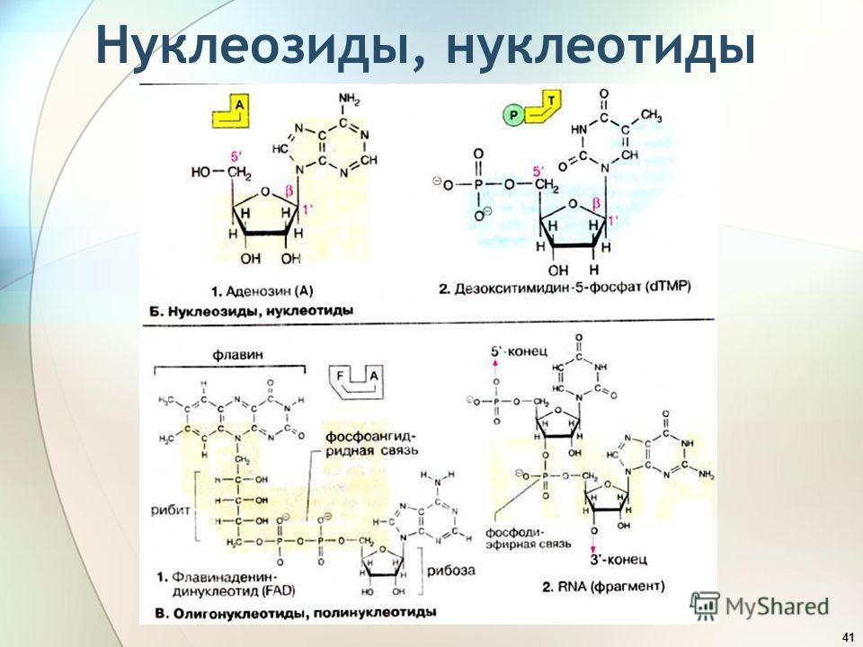 Нуклеозиды, нуклеотиды 41
