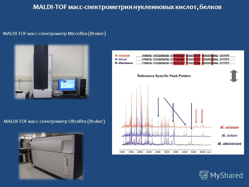 MALDI-TOF масс-спектрометрия нуклеиновых кислот, белков MALDI-TOF масс-спектрометр Microflex (Bruker) MALDI-TOF масс-спектрометр Ultraflex (Bruker)