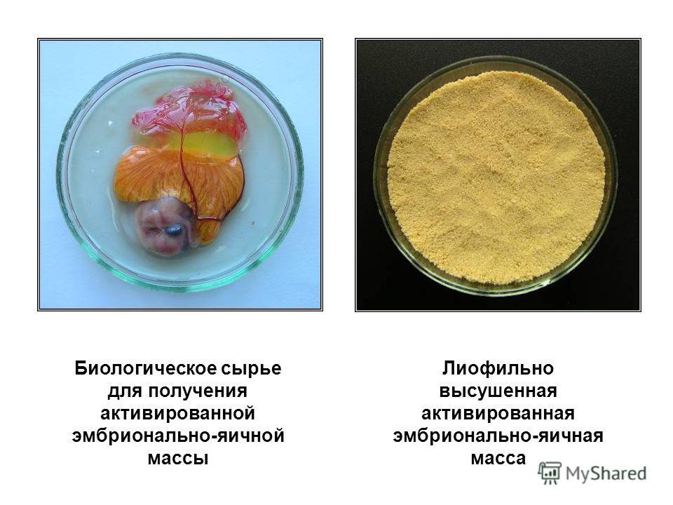 Биологическое сырье для получения активированной эмбрионально-яичной массы Лиофильно высушенная активированная эмбрионально-яичная масса