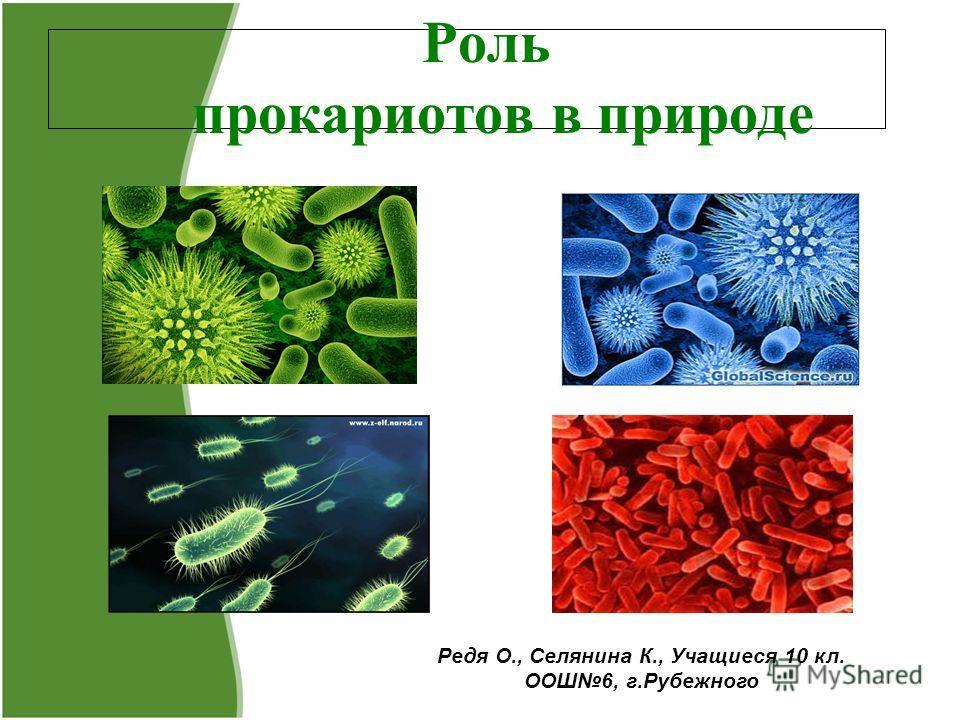 Роль прокариотов в природе Редя О., Селянина К., Учащиеся 10 кл. ООШ6, г.Рубежного