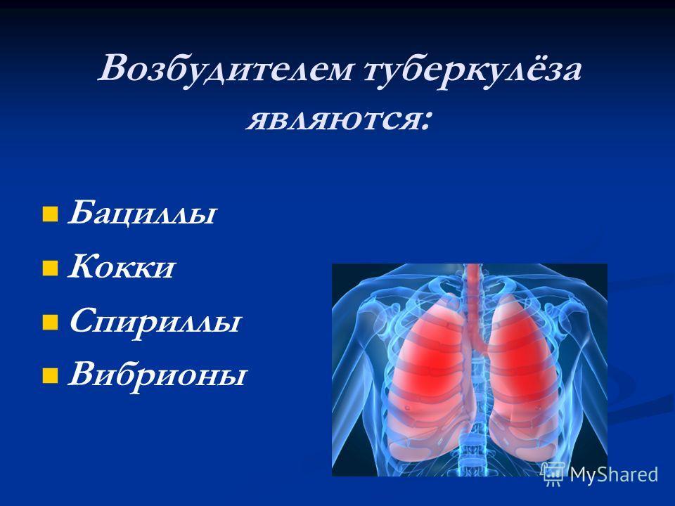 Возбудителем туберкулёза являются: Бациллы Кокки Спириллы Вибрионы