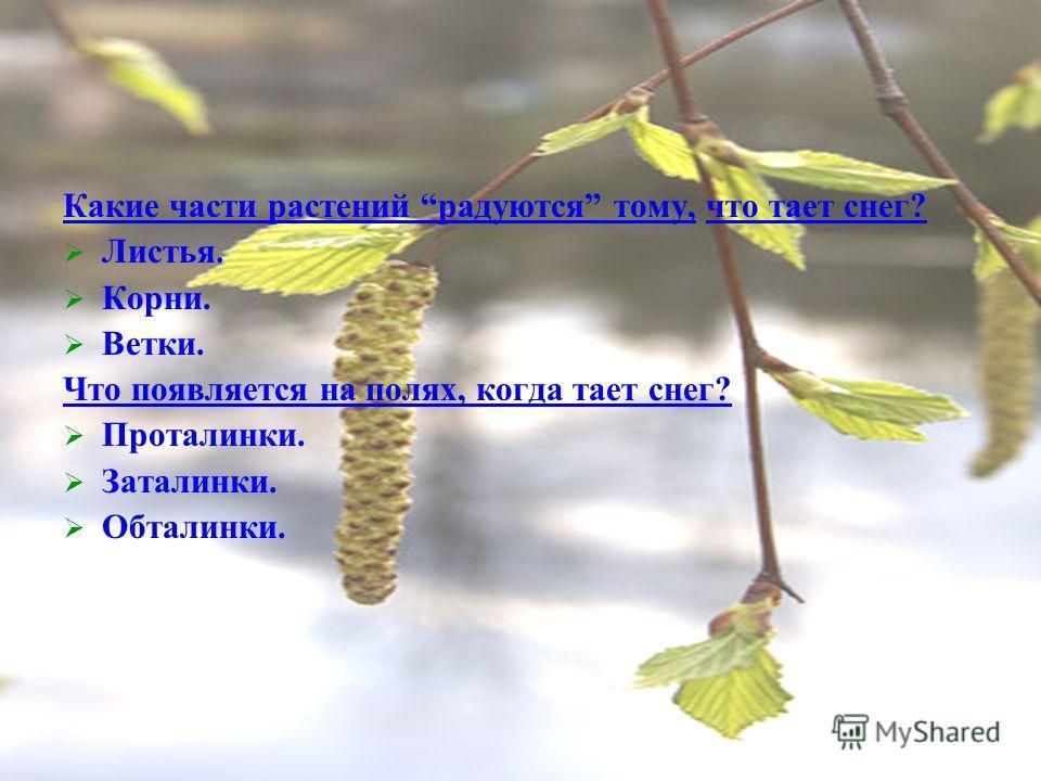 Какие части растений радуются тому, что тает снег? Листья. Корни. Ветки. Что появляется на полях, когда тает снег? Проталинки. Заталинки. Обталинки.