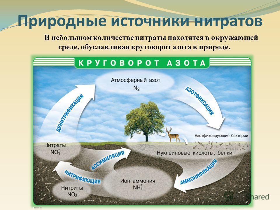 В небольшом количестве нитраты находятся в окружающей среде, обуславливая круговорот азота в природе. Природные источники нитратов