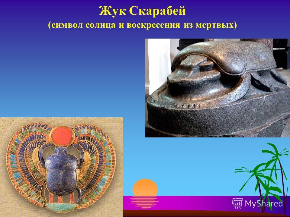 Жук Скарабей (символ солнца и воскресения из мертвых)