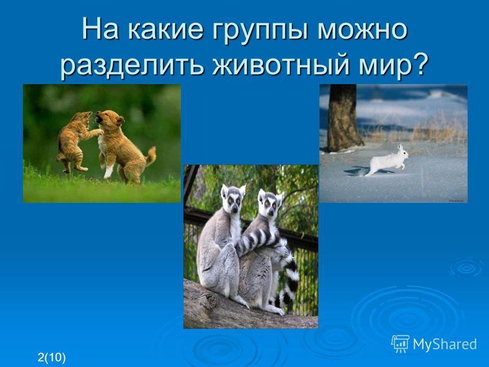 На какие группы можно разделить животный мир? 2(10)