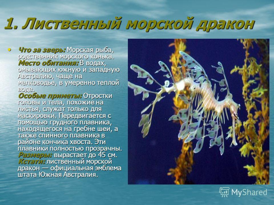 1. Лиственный морской дракон Что за зверь: Морская рыба, родственник морского конька. Место обитания: В водах, омывающих южную и западную Австралию, чаще на мелководье, в умеренно теплой воде. Особые приметы: Отростки головы и тела, похожие на листья