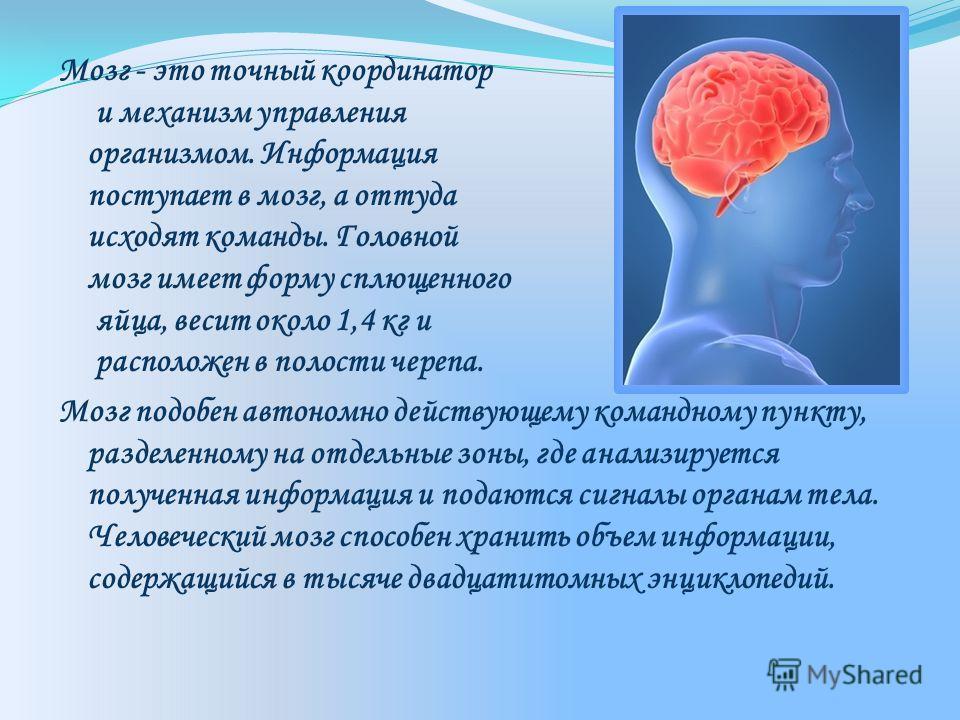 Мозг - это точный координатор и механизм управления организмом. Информация поступает в мозг, а оттуда исходят команды. Головной мозг имеет форму сплющенного яйца, весит около 1,4 кг и расположен в полости черепа. Мозг подобен автономно действующему к