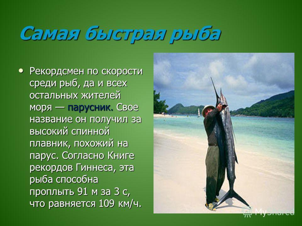 Самая быстрая рыба Рекордсмен по скорости среди рыб, да и всех остальных жителей моря парусник. Свое название он получил за высокий спинной плавник, похожий на парус. Согласно Книге рекордов Гиннеса, эта рыба способна проплыть 91 м за 3 с, что равняе