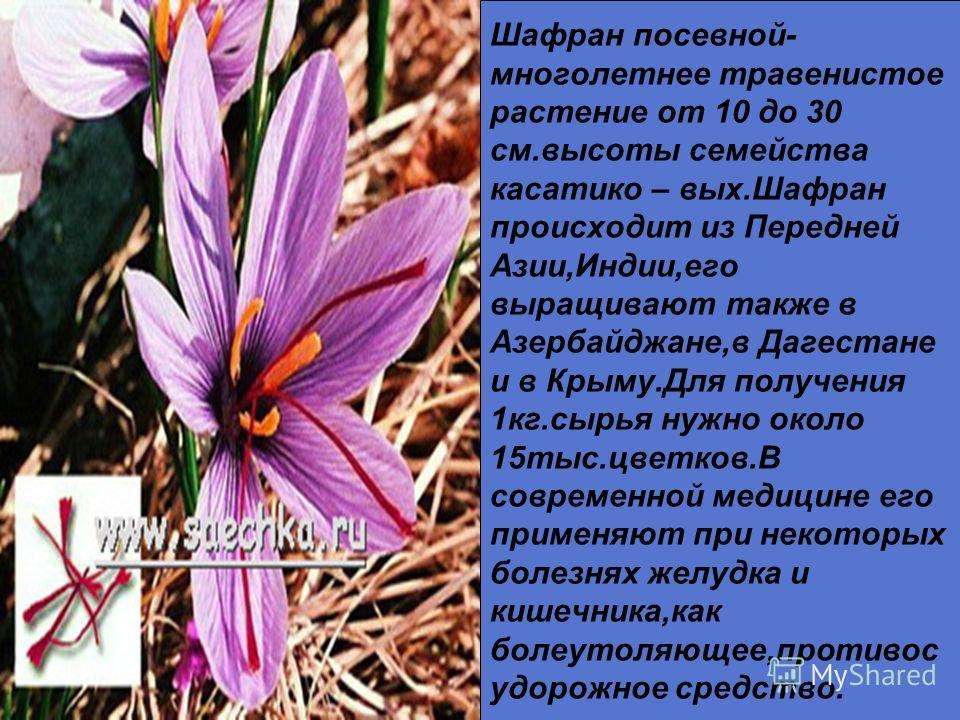 Черноголовка-многолет-нее травянистое растение семейства губоцветных.Стебли высотой 10-20 см. от- растают от ползучего разветвленного корневища,покрыты черешковыми продолго- вато-яйцевидными листьями.Цветет в мае-в августе.Сырье обладает противовоспа