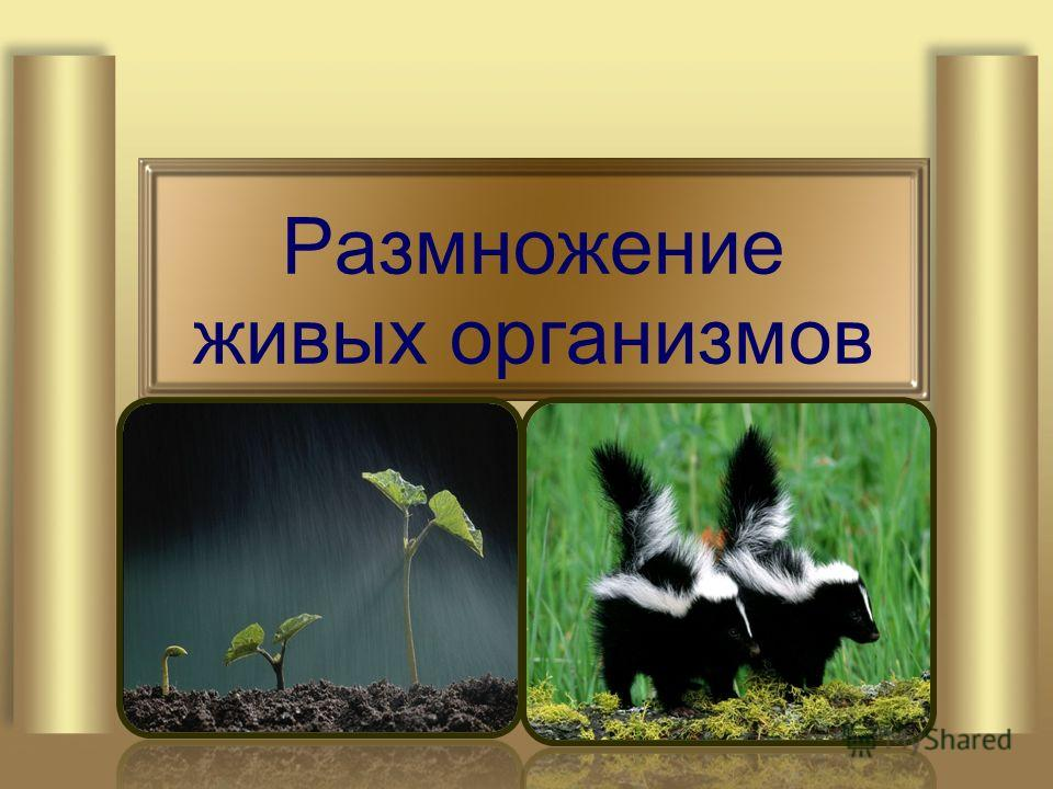 Размножение живых организмов