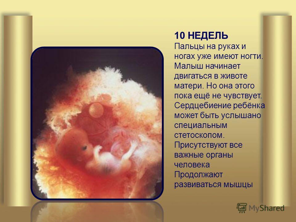 10 НЕДЕЛЬ Пальцы на руках и ногах уже имеют ногти. Малыш начинает двигаться в животе матери. Но она этого пока ещё не чувствует. Сердцебиение ребёнка может быть услышано специальным стетоскопом. Присутствуют все важные органы человека Продолжают разв