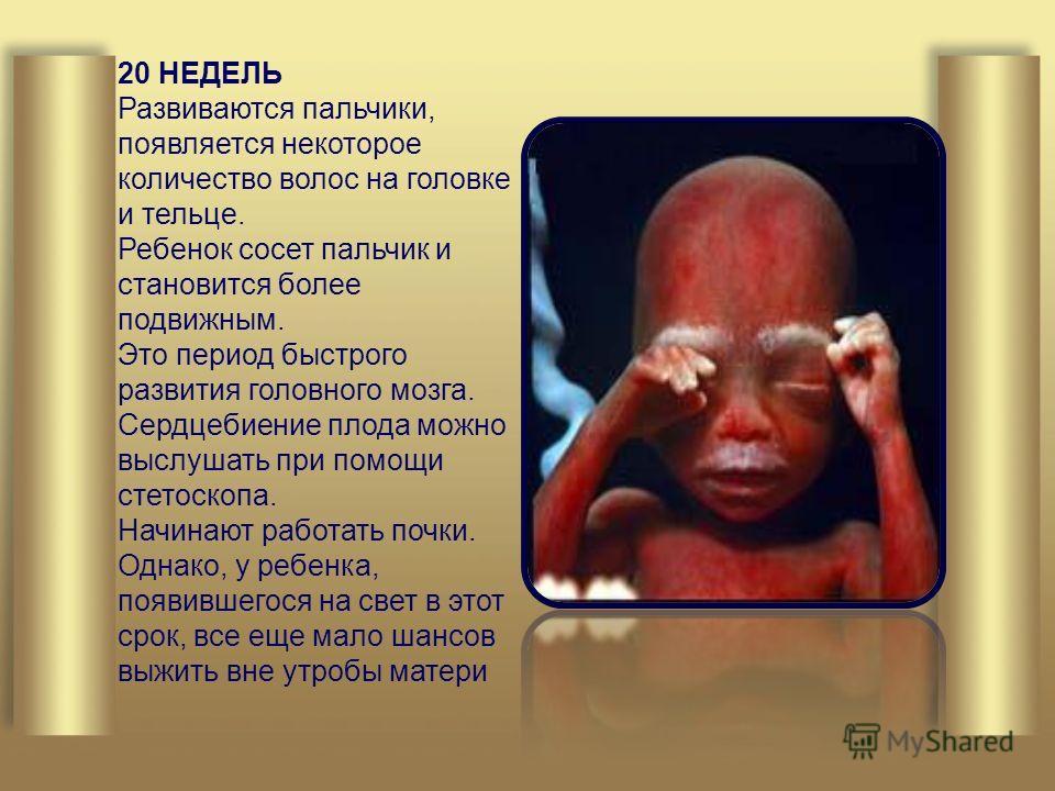 20 НЕДЕЛЬ Развиваются пальчики, появляется некоторое количество волос на головке и тельце. Ребенок сосет пальчик и становится более подвижным. Это период быстрого развития головного мозга. Сердцебиение плода можно выслушать при помощи стетоскопа. Нач