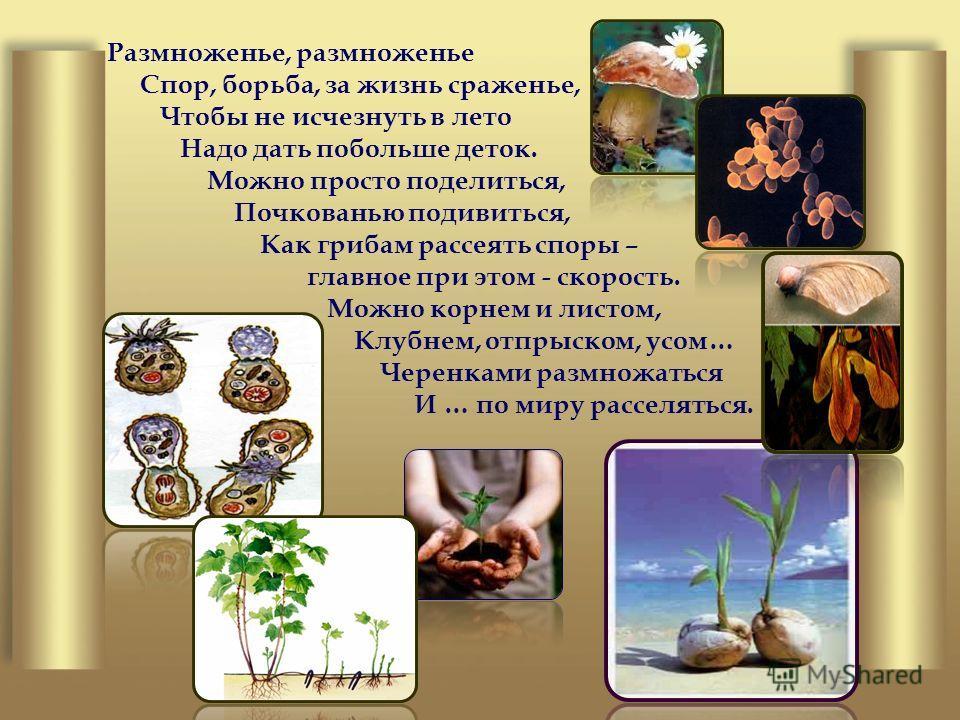 Размноженье, размноженье Спор, борьба, за жизнь сраженье, Чтобы не исчезнуть в лето Надо дать побольше деток. Можно просто поделиться, Почкованью подивиться, Как грибам рассеять споры – главное при этом - скорость. Можно корнем и листом, Клубнем, отп