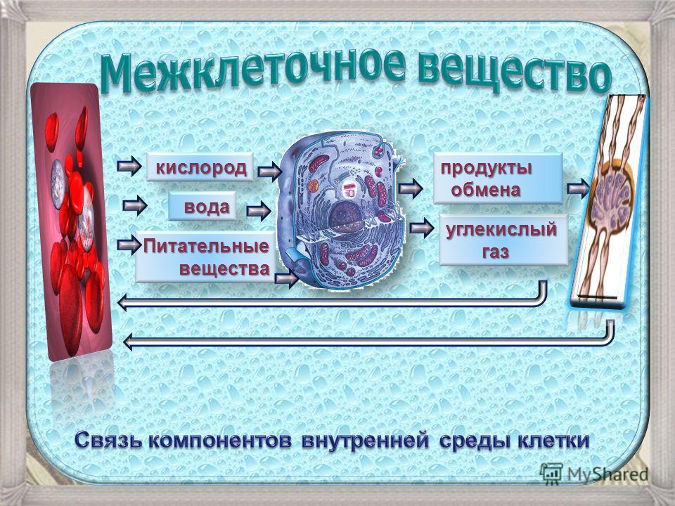 кислород вода Питательные вещества углекислый газ газ продукты обмена обмена