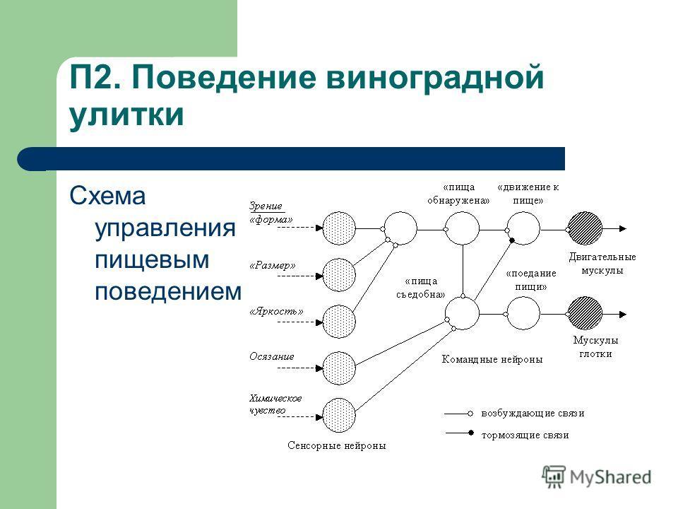 П2. Поведение виноградной улитки Схема управления пищевым поведением