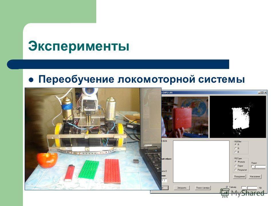 Эксперименты Переобучение локомоторной системы