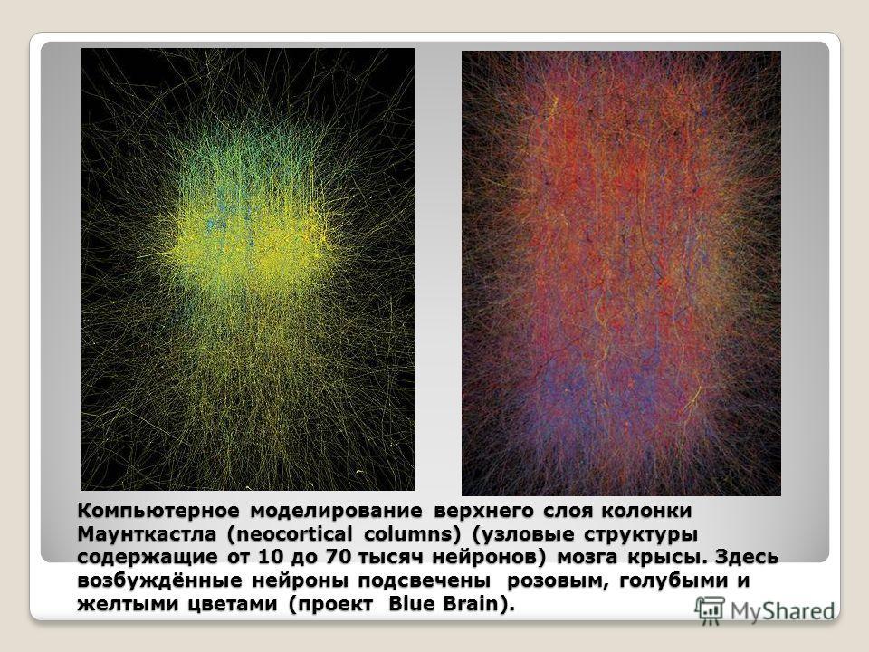 Компьютерное моделирование верхнего слоя колонки Маунткастла (neocortical columns) (узловые структуры содержащие от 10 до 70 тысяч нейронов) мозга крысы. Здесь возбуждённые нейроны подсвечены розовым, голубыми и желтыми цветами (проект Blue Brain).