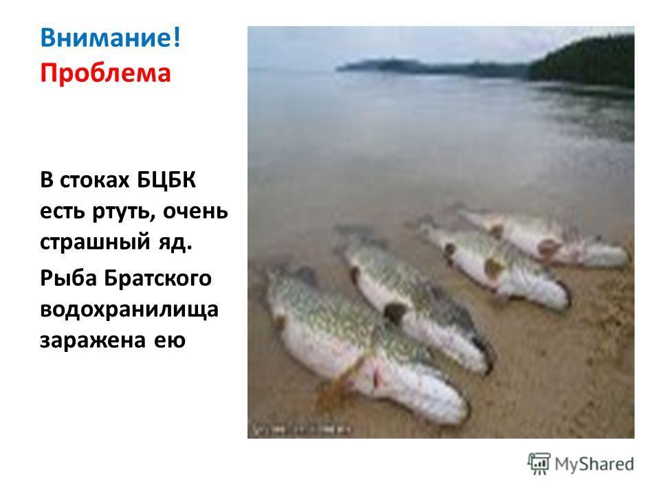 Внимание! Проблема В стоках БЦБК есть ртуть, очень страшный яд. Рыба Братского водохранилища заражена ею