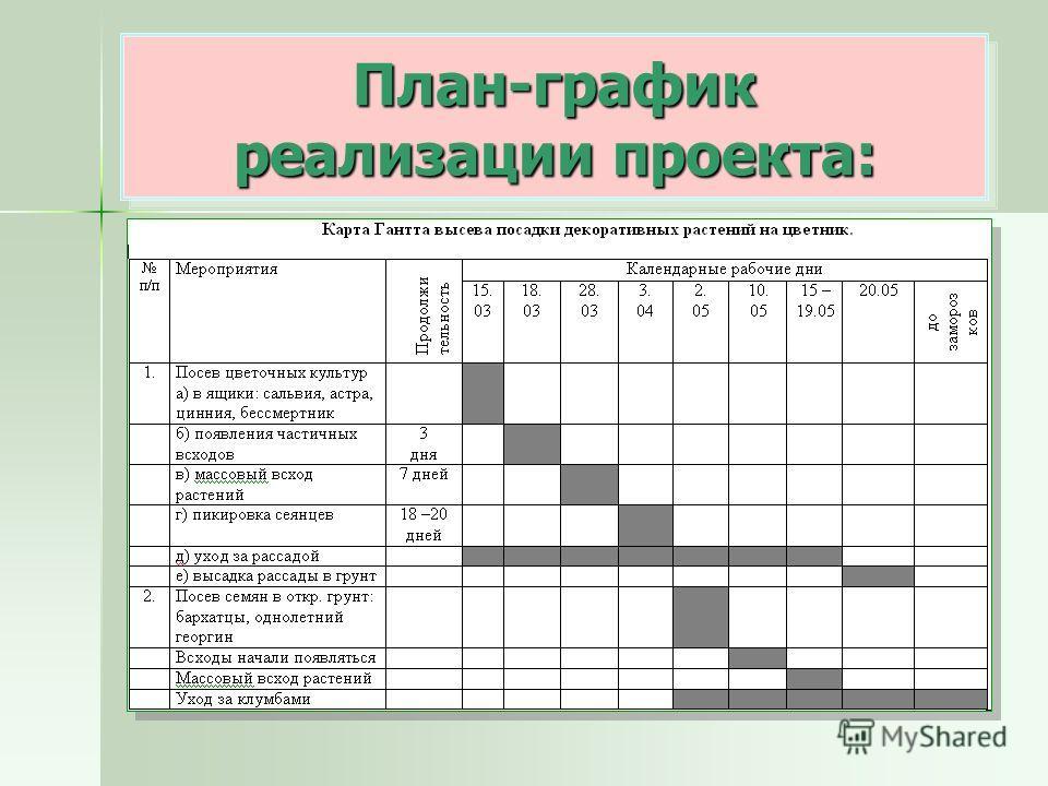 План-график реализации проекта: