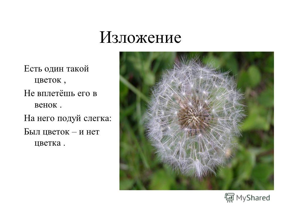Изложение Есть один такой цветок, Не вплетёшь его в венок. На него подуй слегка: Был цветок – и нет цветка.