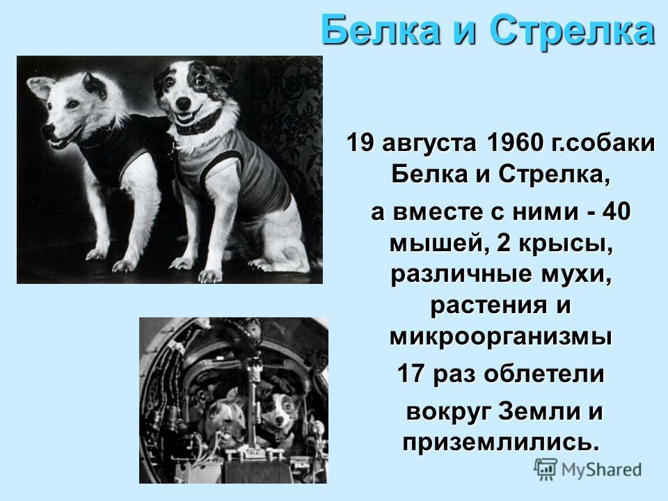 Белка и Стрелка 19 августа 1960 г.собаки Белка и Стрелка, а вместе с ними - 40 мышей, 2 крысы, различные мухи, растения и микроорганизмы 17 раз облетели вокруг Земли и приземлились. вокруг Земли и приземлились.