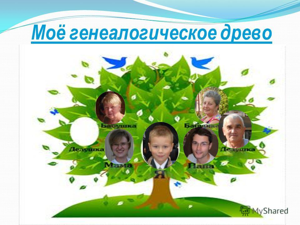 Моё генеалогическое древо Крейнин Никита Галина Павловна