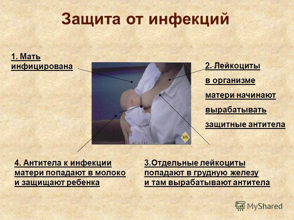 Защита от инфекций 1. Мать инфицирована 2. Лейкоциты в организме матери начинают вырабатывать защитные антитела 3.Отдельные лейкоциты попадают в грудную железу и там вырабатывают антитела 4. Антитела к инфекции матери попадают в молоко и защищают реб
