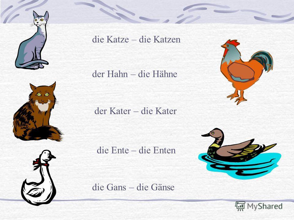 die Katze – die Katzen der Kater – die Kater der Hahn – die Hähne die Ente – die Enten die Gans – die Gänse
