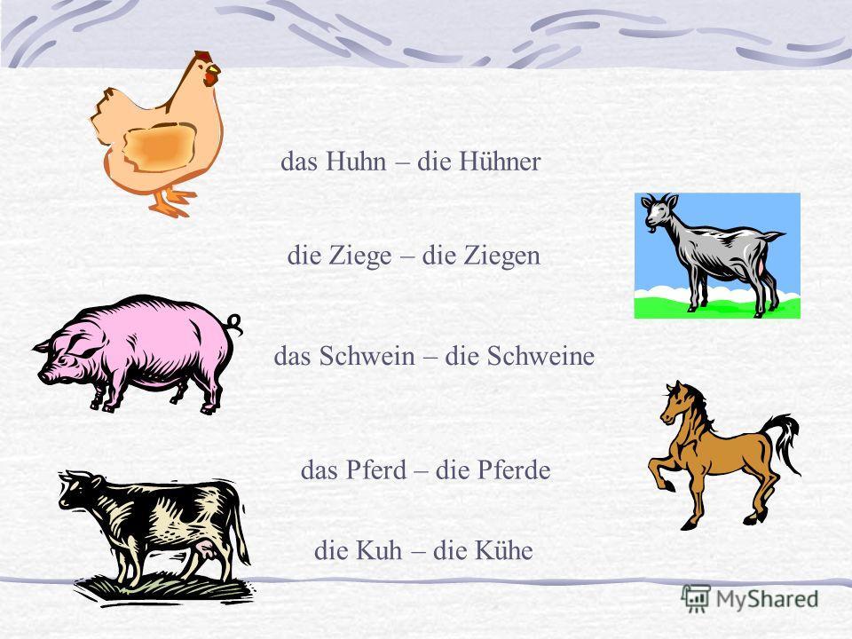 das Huhn – die Hühner das Schwein – die Schweine die Kuh – die Kühe die Ziege – die Ziegen das Pferd – die Pferde