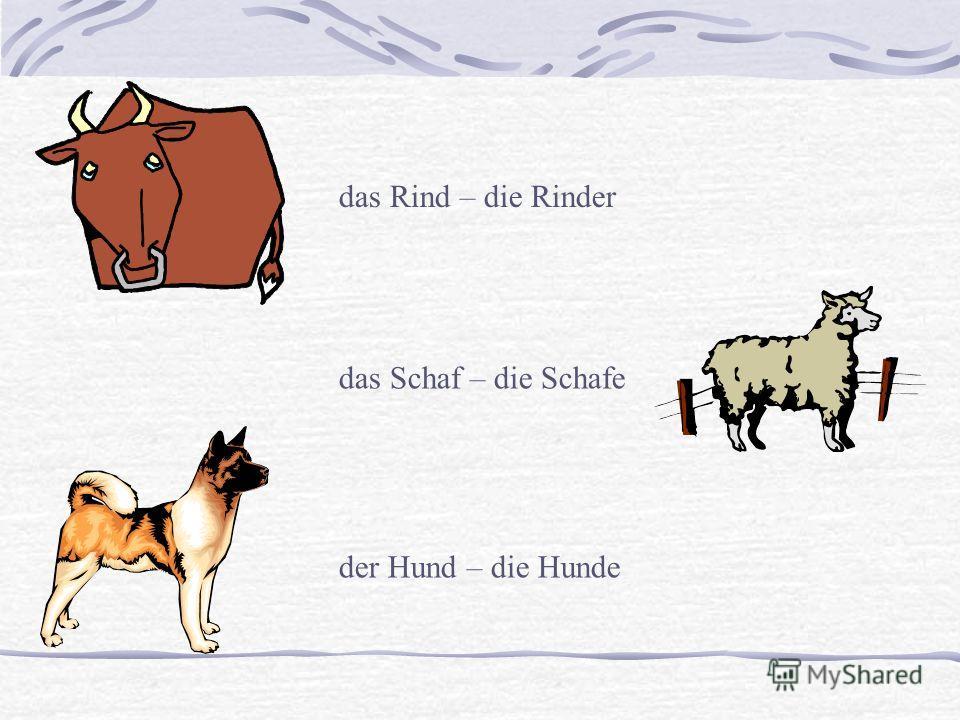 das Rind – die Rinder das Schaf – die Schafe der Hund – die Hunde