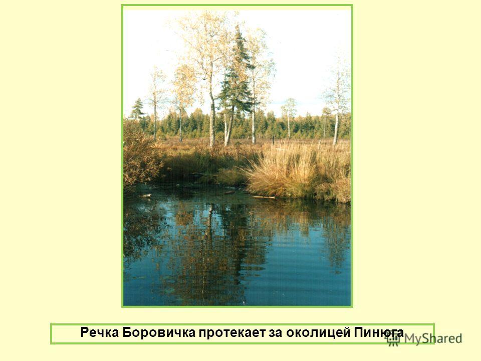 Речка Боровичка протекает за околицей Пинюга