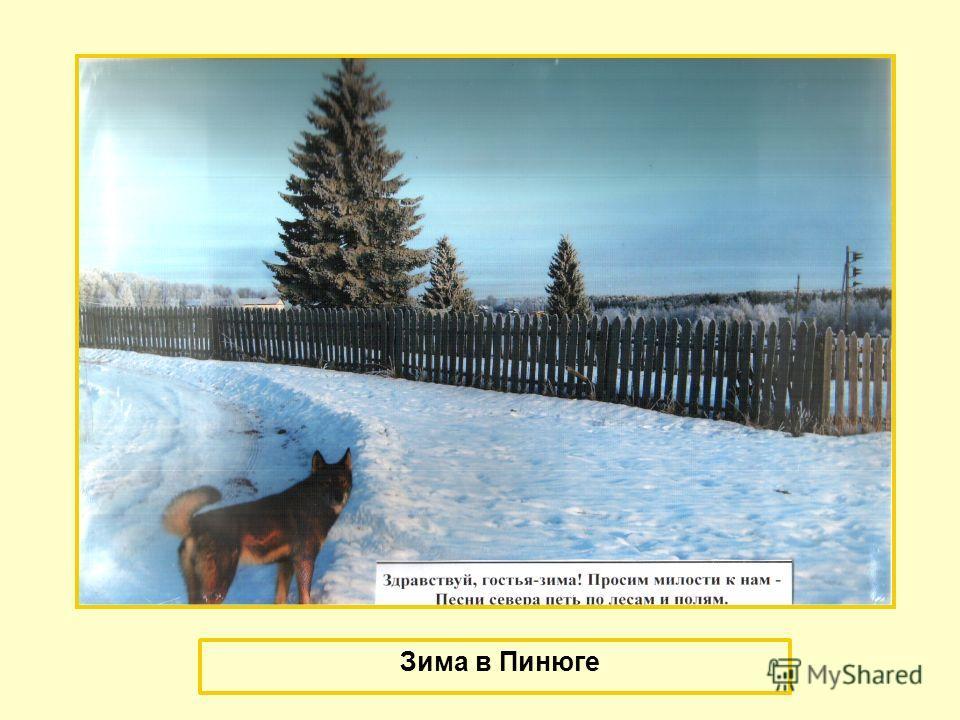Зима в Пинюге