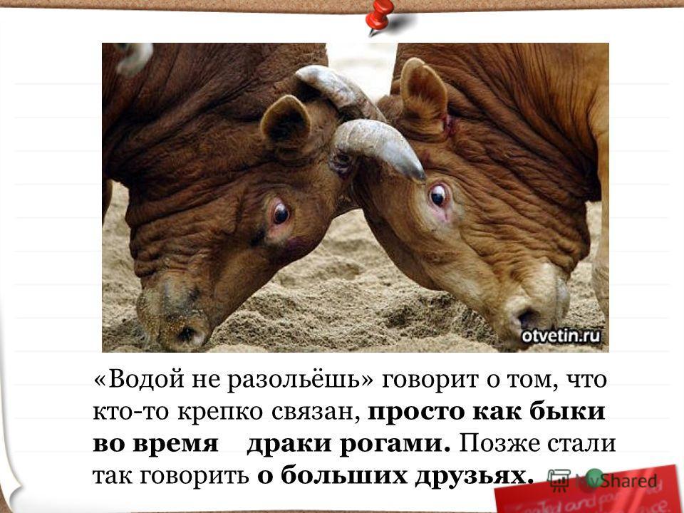 «Водой не разольёшь» говорит о том, что кто-то крепко связан, просто как быки во время драки рогами. Позже стали так говорить о больших друзьях.