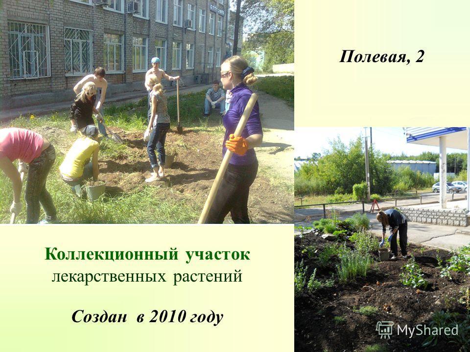 Коллекционный участок лекарственных растений Создан в 2010 году Полевая, 2