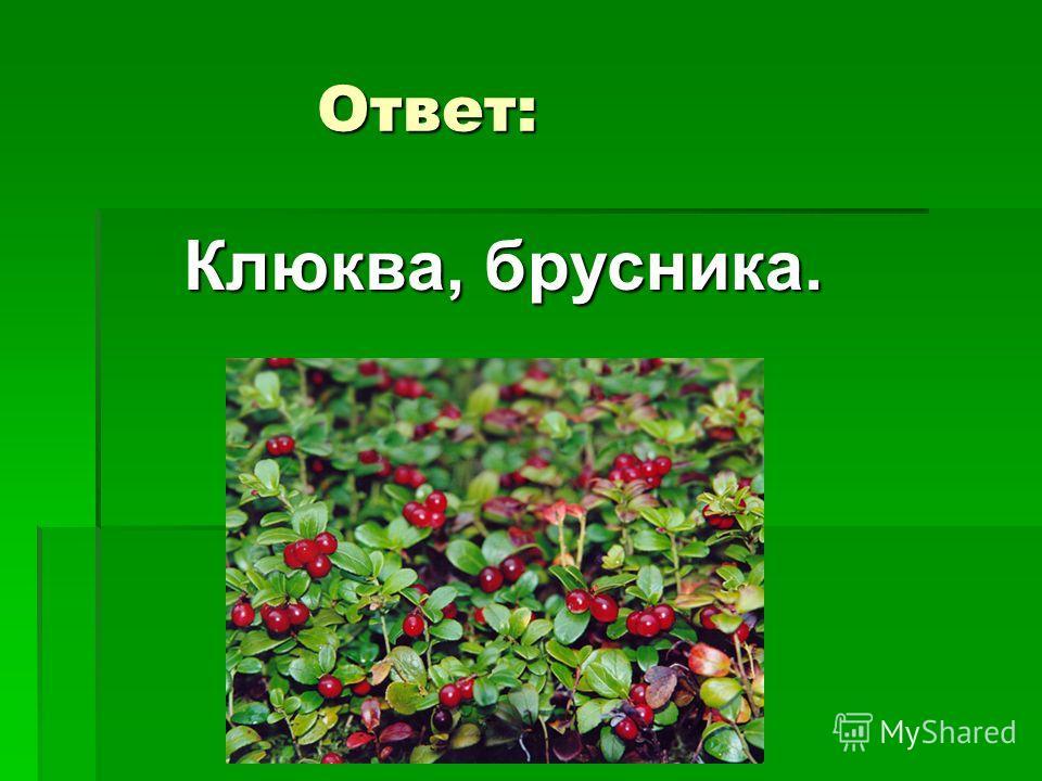 5 вопрос Какие ягоды можно собирать весной, когда сойдет снег?