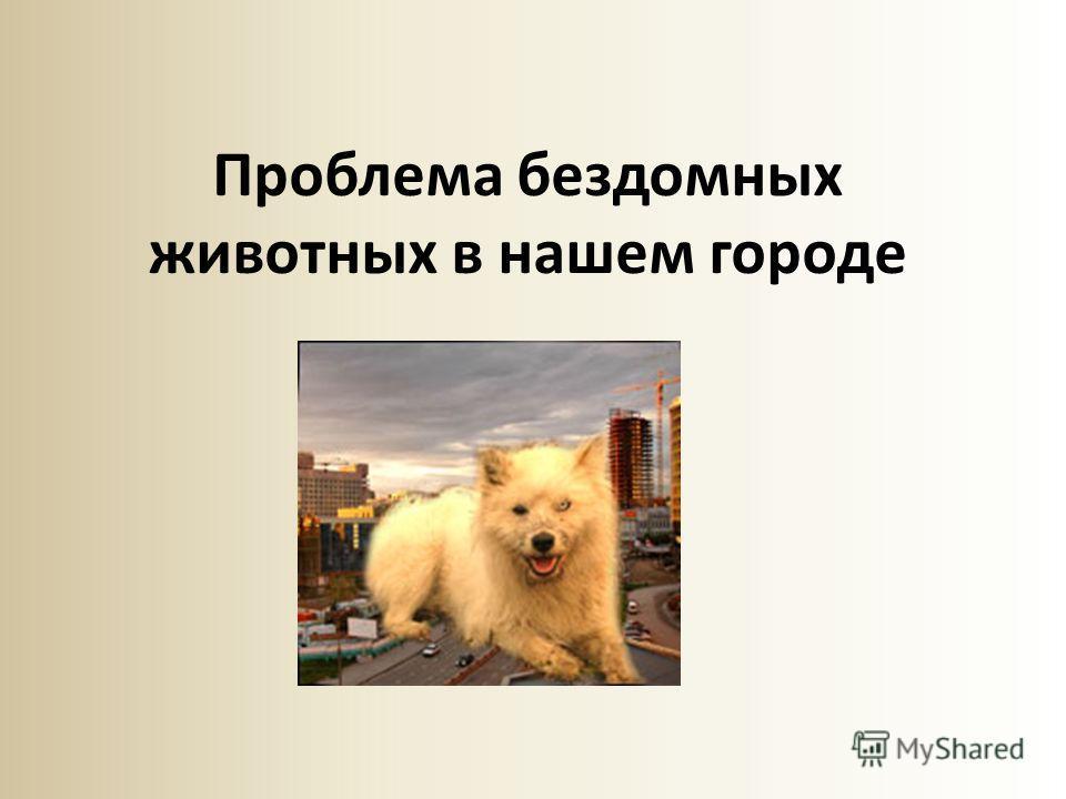 Проблема бездомных животных в нашем городе