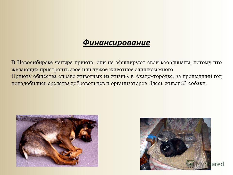 Финансирование В Новосибирске четыре приюта, они не афишируют свои координаты, потому что желающих пристроить своё или чужое животное слишком много. Приюту общества «право животных на жизнь» в Академгородке, за прошедший год понадобились средства доб