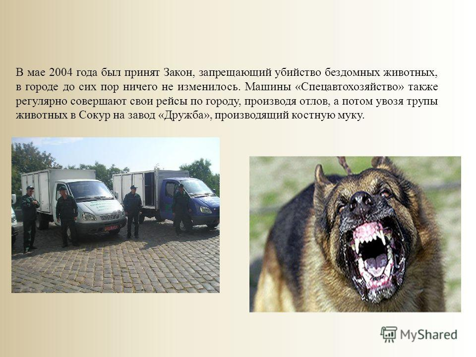 В мае 2004 года был принят Закон, запрещающий убийство бездомных животных, в городе до сих пор ничего не изменилось. Машины «Спецавтохозяйство» также регулярно совершают свои рейсы по городу, производя отлов, а потом увозя трупы животных в Сокур на з