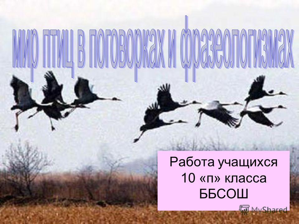 Работа учащихся 10 «п» класса ББСОШ